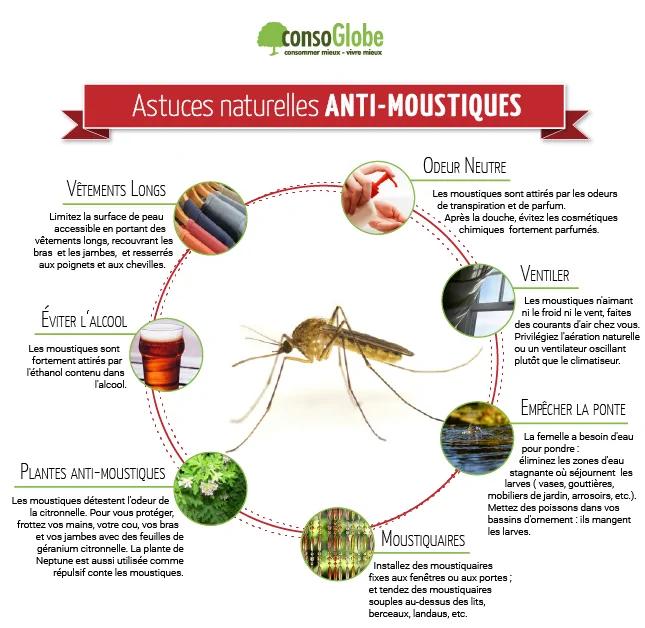 fiche moustique